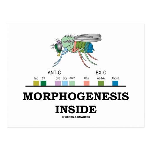 Morphogenesis Inside (Fruit Fly Drosophila Genes) Postcard