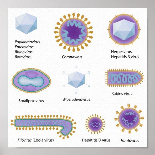 Morphology of common viruses Poster