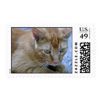 Morris Stamps