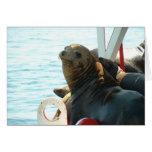 Morro Bay Seal Greeting Card