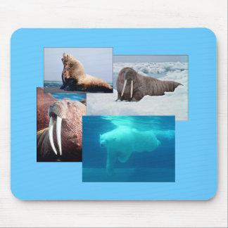 Morsa, oso polar, león marino Bull Mousepad