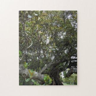 Morton Bay Fig Puzzle