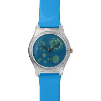 Morum acuático de Pandorina de las algas de las fo Relojes