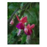 Mosaic Fuchsia 2 Post Cards