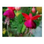 Mosaic Fuchsia 3 Post Card