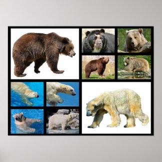 Mosaic photos bears poster