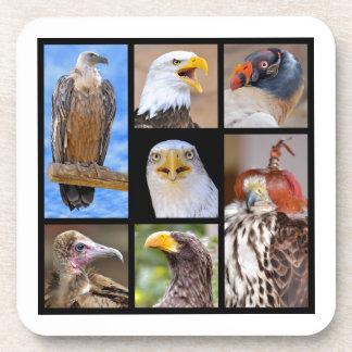 Mosaic photos birds of prey coaster