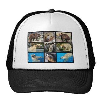 Mosaic photos of bears hat
