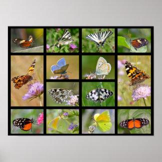 Mosaic photos of butterflies poster