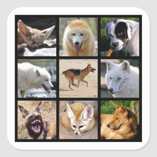 Mosaic photos of Canidae Square Sticker
