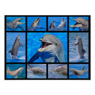 Mosaic photos of dolphins poster
