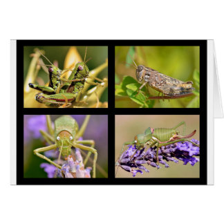 Mosaic photos of grasshoppers card