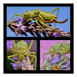 Mosaic photos of grasshoppers poster