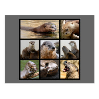 Mosaic photos of otters postcard