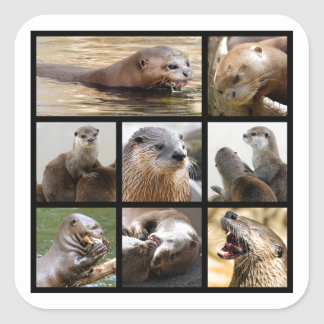 Mosaic photos of otters square sticker