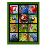 Mosaic photos of parrots post card