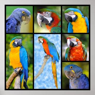 Mosaic photos of parrots print