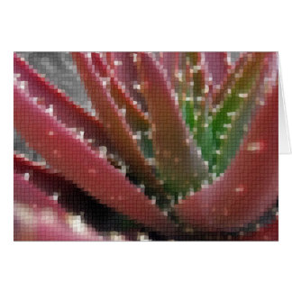 Mosaic Red-Green Aloe Cards