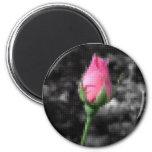Mosaico 4 color de rosa rosados iman para frigorífico