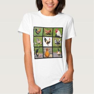 Mosaico de las fotos de gallos y de gallinas playeras
