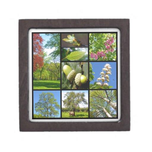 Mosaico de los árboles cajas de joyas de calidad