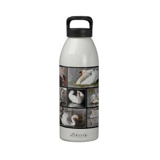 Mosaico múltiple de las fotos de cisnes mudos botallas de agua