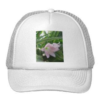 Mosaico pálido - Amaryllis rosado 1 Gorro