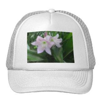Mosaico pálido - Amaryllis rosado 5 Gorras