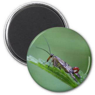 Mosca común del escorpión (Panorpa communis) Imán Redondo 5 Cm