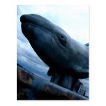 Mosca de la ballena postales