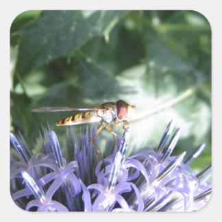 Mosca de la libración en una flor púrpura pegatina cuadrada