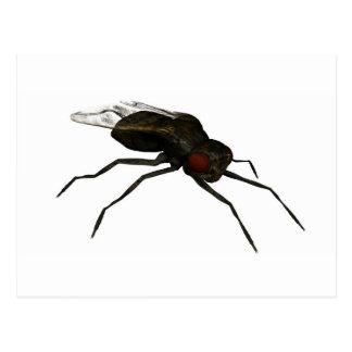 mosca doméstica postal