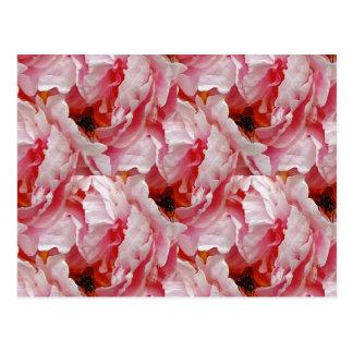 Mosca en color de rosa rosado postal