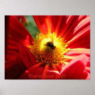 Mosca en un estampado de flores póster