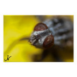 mosca macra impresiones