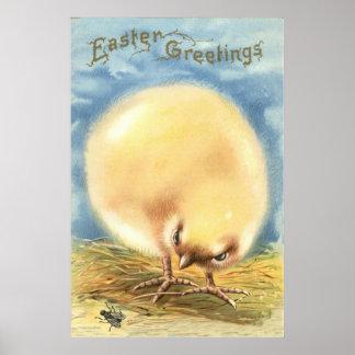 Mosca mullida del polluelo de Pascua del Puffball Póster