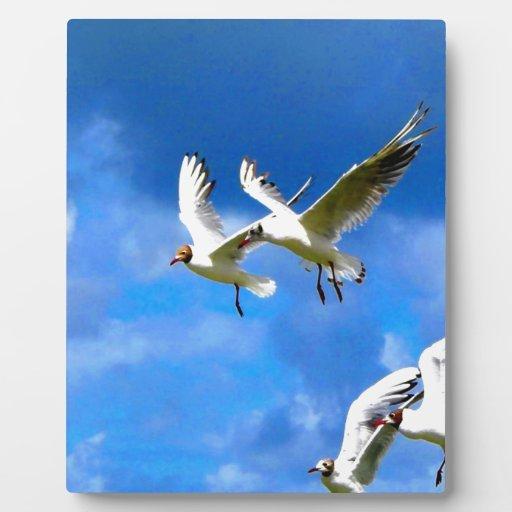 Mosca para amar pájaros del parasise juntos placas de plastico