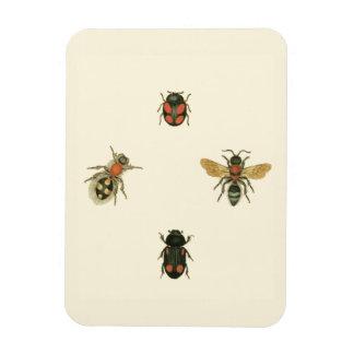 Moscas y escarabajos por el estudio de Vision Imán Foto Rectangular