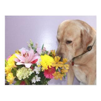 Moses huele las flores tarjeta postal