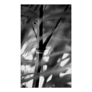 Moso Bamboo Shoot in Black and white Poster