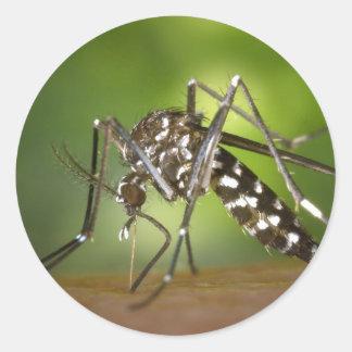 Mosquito del tigre pegatina redonda