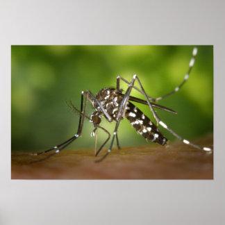 Mosquito del tigre póster