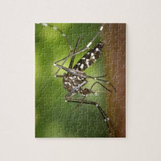 Mosquito del tigre puzzles con fotos
