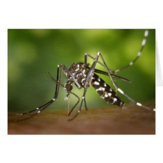 Mosquito del tigre tarjeta pequeña