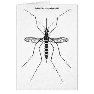 Mosquito Scientific Nomenclature Illustration NICE Greeting Card