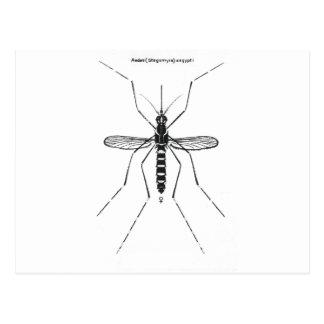 Mosquito Scientific Nomenclature Illustration NICE Postcards