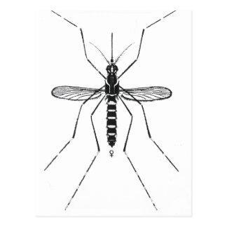 Mosquito Scientific Nomenclature Illustration NICE Postcard