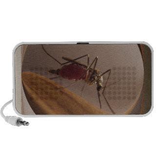 Mosquito ~ speaker