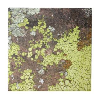 moss #4 ceramic tile