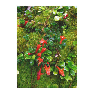 Moss and Peperomia Canvas Print